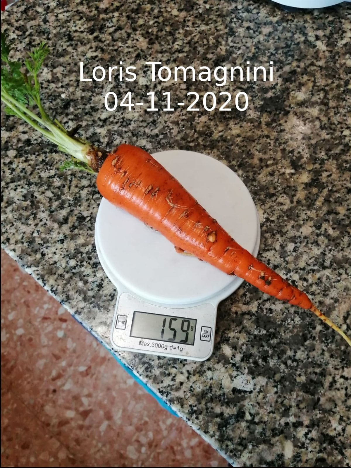lacarotadiloristomagnini04112020-min-1604512873.jpg